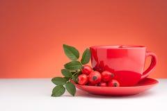Rose Hip Tea. And fresh rose hips royalty free stock photos