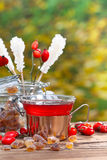 Rose hip tea in the garden Stock Photography