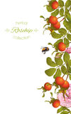 Rose hip vertical banner. Vector rose hip vertical banner on white background. Design for tea, homeopathy, herbal cosmetics,health care products. With place for Royalty Free Stock Photography