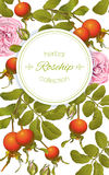 Rose hip vertical banner. Vector rose hip vertical banner on white background. Design for tea, homeopathy, herbal cosmetics,health care products. With place for Royalty Free Stock Images