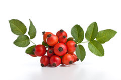 Rose hips Royalty Free Stock Images
