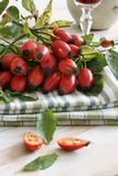 Rose Hips. Also known as rose haw fruit of the Dog Rose Royalty Free Stock Image