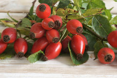 Rose Hips. Also known as rose haw fruit of the Dog Rose Stock Photo