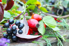 Rose hips and autumn fruits Stock Images