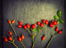 Rose hips berries on black slate background , toned Royalty Free Stock Image