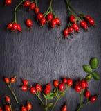 Rose hips berries on dark slate background, top view Stock Image