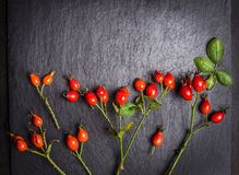 Rose hips berries with leaves on dark background Stock Photo