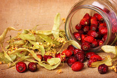 Rose hips and dry linden blossom Stock Image