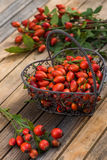 Rose hips Stock Photo
