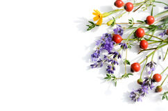Rose hips and herbs Stock Photos