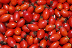 Rose hips. Image of rose hips harvested from garden Stock Photo