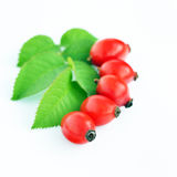 Rose hips isolated Stock Photography