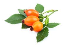 Rose hips Stock Photos