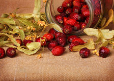 Rose hips and linden blossom Royalty Free Stock Image