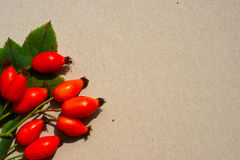 Rose Hips On Paper Background Stock Afbeelding