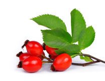 Rose hips Royalty Free Stock Image