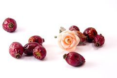 Rose hips and rose flower stock photography