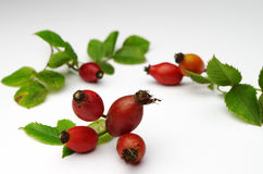 Rose hips at the studio Royalty Free Stock Photos