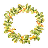 Rose hips watercolor wreath Royalty Free Stock Images