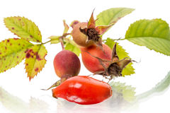 Rose hips on white Royalty Free Stock Images
