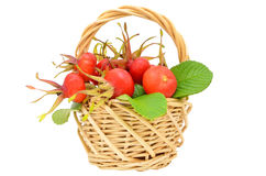 Rose hips in the wicker basket Royalty Free Stock Photos