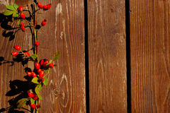 Rose Hips On Wood Background Lizenzfreies Stockfoto