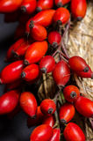Rose hips on wreath Royalty Free Stock Photos