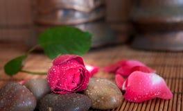 Rose on hot rocks Royalty Free Stock Image