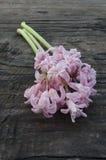 Rose Hyacinth Royalty Free Stock Photos