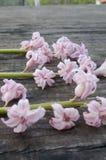 Rose Hyacinths Royalty Free Stock Photo