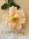 Rose I love you vertical Royalty Free Stock Image