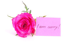 Rose with I am sorry note Royalty Free Stock Photography