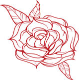Rose  illustration. Royalty Free Stock Photography