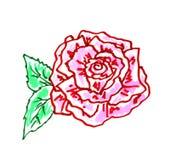 Rose Illustration Fotos de Stock