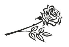 Rose. Illustration of black and white rose with thorns