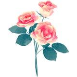 Rose - illustration de vecteur de fleur de naissance en texte de peinture d'aquarelle Image libre de droits