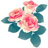 Rose - illustration de vecteur de fleur de naissance en texte de peinture d'aquarelle Image stock