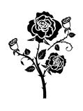 Rose illustration. Decorative rose flowers with buds and thorns Royalty Free Stock Image