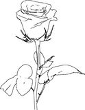 Rose Illustration /eps Stock Images