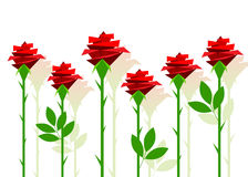 Rose. An illustration red roses with leaves on a white background Stock Image