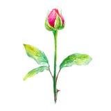 Rose Illustration tirée par la main d'aquarelle illustration stock