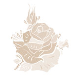 Rose. Illustration of rose, vector, flower Stock Image