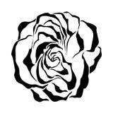 Rose. Ilustración del vector. libre illustration