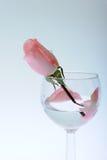 Rose im Glas Stockbild