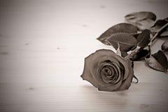 Rose im Monochrom lizenzfreies stockfoto