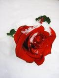 Rose im Schnee Stockbilder