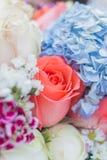 Rose im selektiven Fokus vieler Blumen Stockfoto
