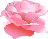 Rose. This image is a  illustration and can be scaled to any size without loss of resolution Stock Image