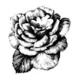 Rose Ink drawing flowers Royalty Free Stock Photo