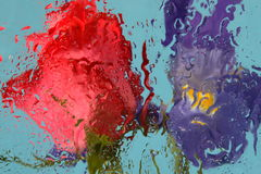 Rose and Iris. Behind wavy glass on blue background Stock Photos